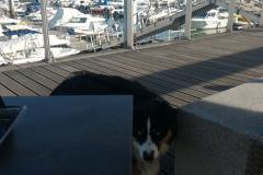 un-berger-australien-a-la-plage-7