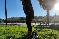 chiot berger australien noir tricolore aux yeux